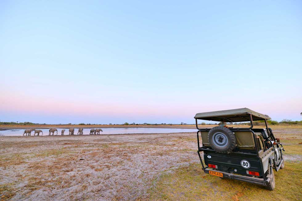 Afrika Ecco sunset game drive in Moremi Game Reserve