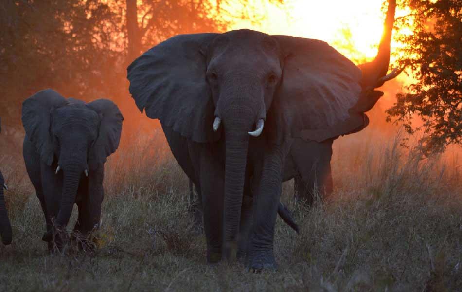 Muzimu Tented Camp © Jean-Paul Vermeulen