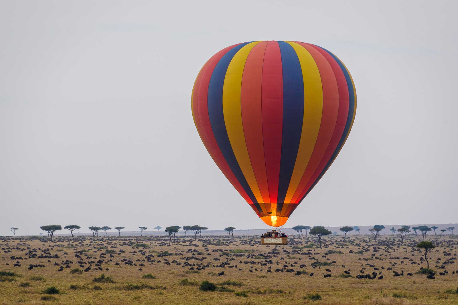 Governor's Balloon Safaris