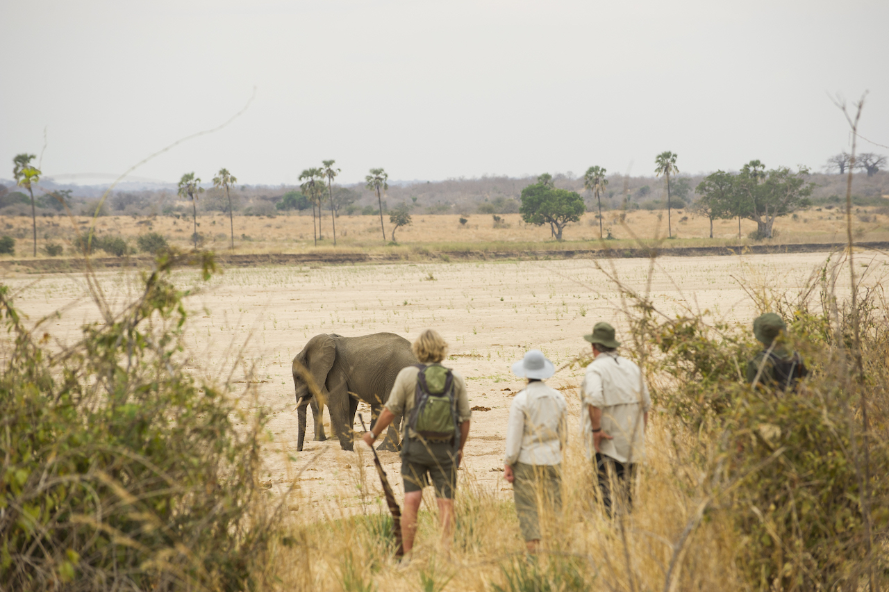 Walking safaris at Kwihala Camp Ruaha