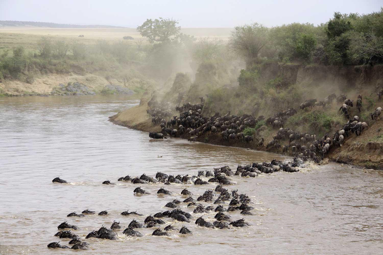 © Basecamp Masai Mara