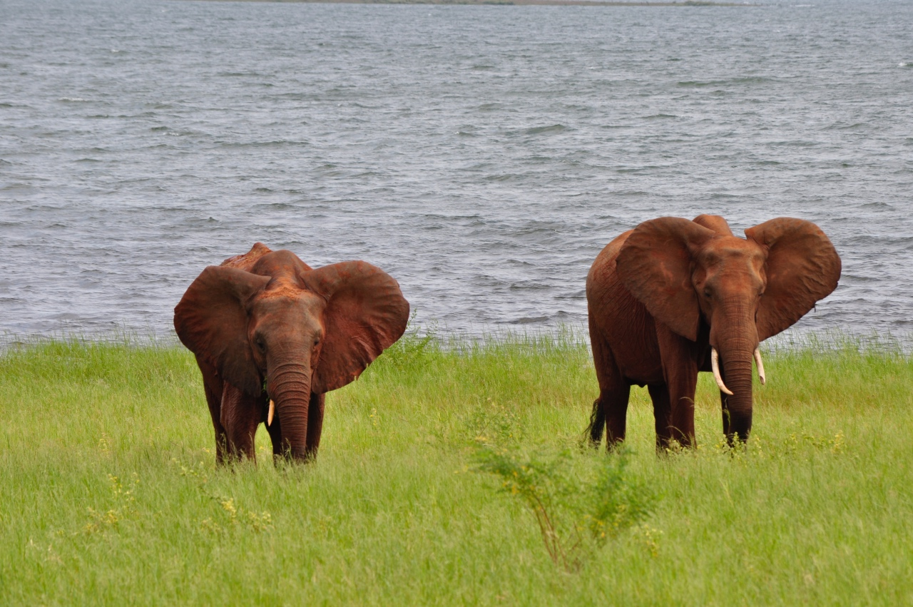 Elephants on the lake's edge at Bumi Hills