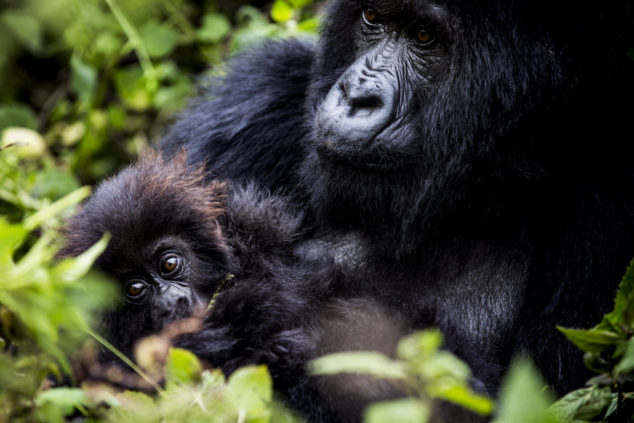 A mother and child, Titus Group, Bisate Lodge, Rwanda